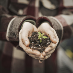 A person in a commercial glasshouse, holding a small plant seedling in soil in her cupped hands.