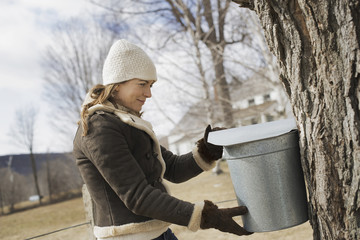 A maple syrup farm. A young woman holding a bucket which is tapping the sap from the tree.