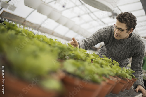 A man working in a greenhouse tending young plants in pots.
