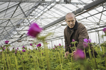 A man working in an organic plant nursery glasshouse in early spring.