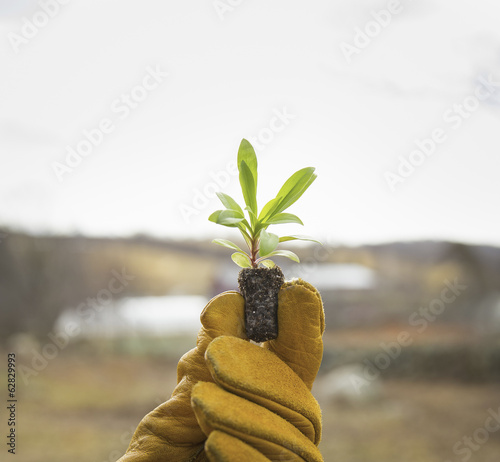 An Organic Farm in Winter in Cold Spring, New York State.  A gloved hand holding a small new seedling with two sets of green leaves.