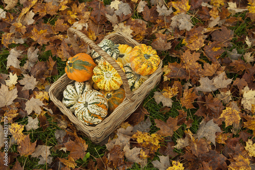 Autumn leaves on the ground. A trug or basket with a selection of squashes and gourds. Vegetables.  Organic farming.