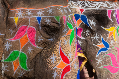 Elaborately adorned elephants during Holi, the Hindu festival of colours, in Jaipur, India. Images of peacocks and tigers on the foreheads.