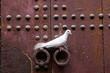Ringneck dove, Morocco africa, Streptopelia risoria,