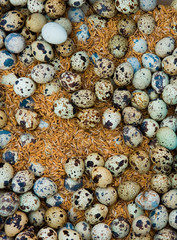 Outdoor market, Yangon, Myanmar. A large group of eggs laid out on a market stall.