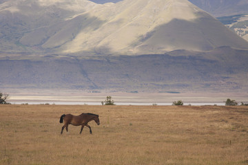 A hose on the open plain in Los Glaciares national park in Argentina