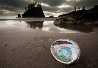 An abalone shell on Second beach, Olympic National Park, Washington, USA
