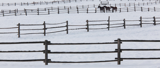 Horses in paddocks on a ranch in the snow at Palouse, Washington, USA
