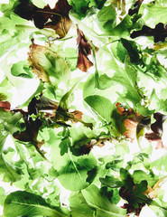 Organic mixed salad greens on white background