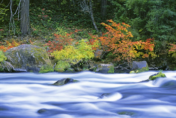 The North Umpqua River flowing through the forest of vine maple trees.