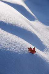 An autumnal red maple leaf lying on snow.