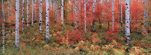The Wasatch Mountain forest of maple and aspen trees, with autumn foliage and fallen leaves.