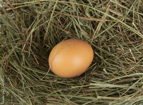 Egg on hay, close up