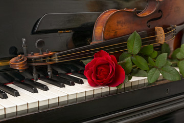 piano red rose violin