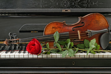 Violin piano rose