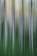 Alder tree forest abstract, blurred motion, Olympic NP