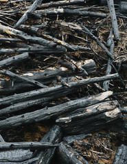 Burned logs and debris from clear cut forest, Olympic NF
