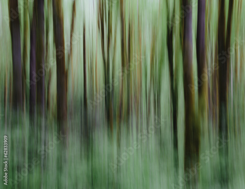 Lush forest of moss covered Big leaf maple trees (Acer macrophyllum), blurred motion, Dosewallips River, Olympic NP