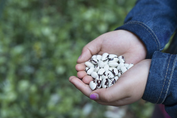 A girl holding out cupped hands, with dried beans.