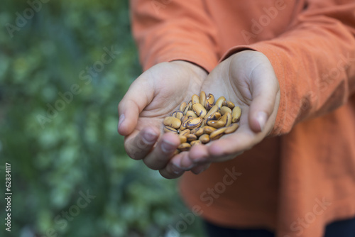 A young boy holding out a handful of dried pulses.
