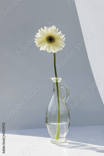 A vase holding a single white gerbera flower.