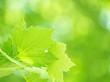 Fresh green foliage background