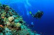 Scuba diving on coral reef - 62835170
