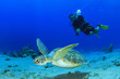 Sea Turtle and Scuba Diver - 62835173