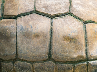 Turtle shell as background
