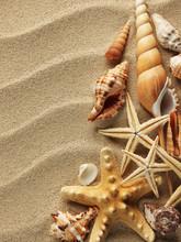 coquillage sur le sable