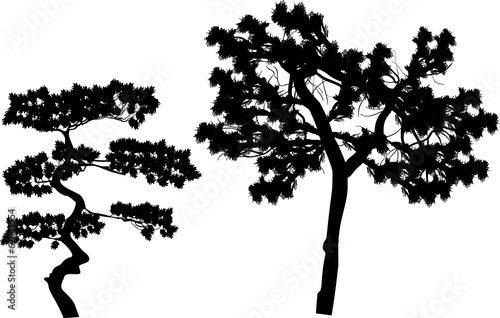 two pine silhouettes isolated on white
