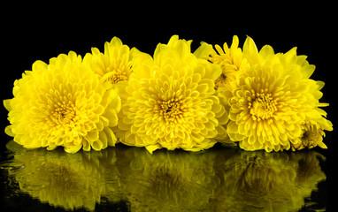 Yellow chrysanthemum on black background.