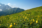 The Alp's field of yellow flowers