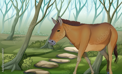 A horse at the forest