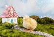 Chick with fantasy house