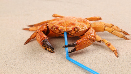 Red crab on sand at beach