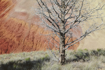 Bare tree among volcanic geological landscape