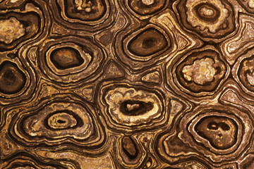 Stromatolite fossil, close up of a cross section and natural pattern, found in Bolivia