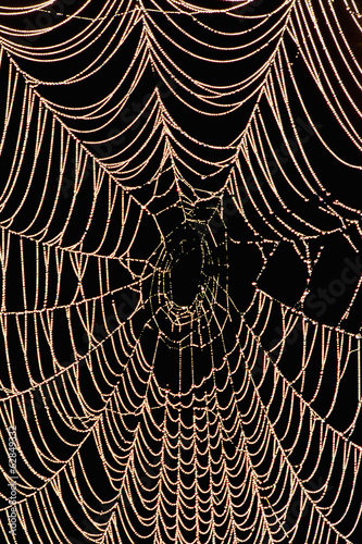 A large spider web with beads of moisture,  Monterey Bay, California
