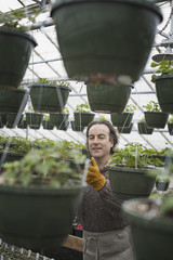 Spring growth in an organic plant nursery. A man in a glasshouse planting containers.
