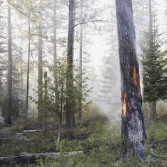 A controlled forest burn, a deliberate fire set to create a healthier and more sustainable forest ecosystem. The prescribed burn of forest creates the right condition for regrowth.