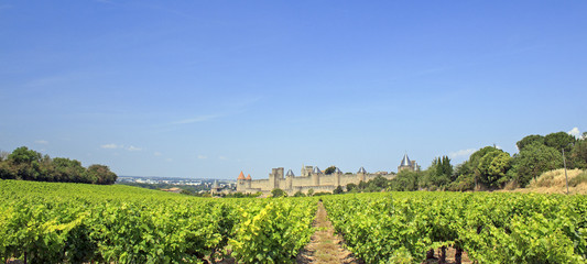 Vineyard from Carcassonne. Southern France.