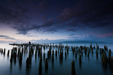 The weathered remains of wood pilings. Upright wooden stumps in water. Oregon, USA