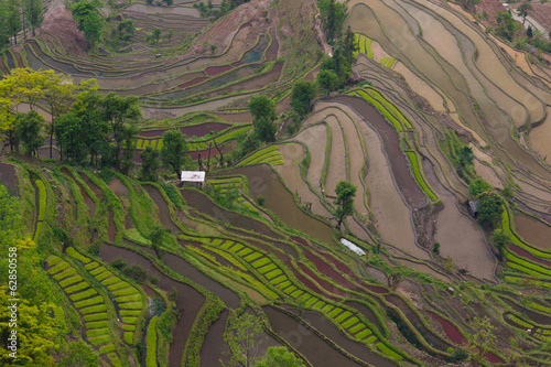 Terraced rice fields, Yuanyang, China