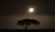 An acacia tree in Serengeti National Park at sunset in Tanzania