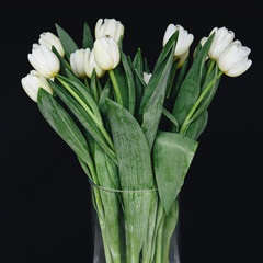 White tulips in a vase, against a black background
