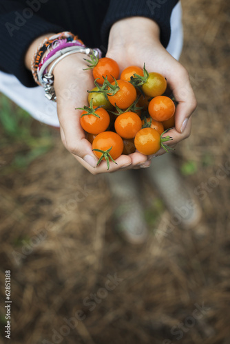 Organic Farming. A girl holding a handful of ripe cherry tomatoes.