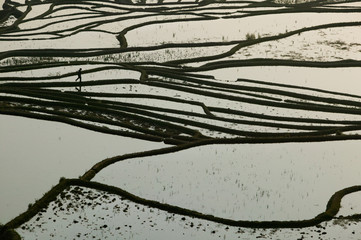 Terraced rice paddy, Yunnan Province, China.