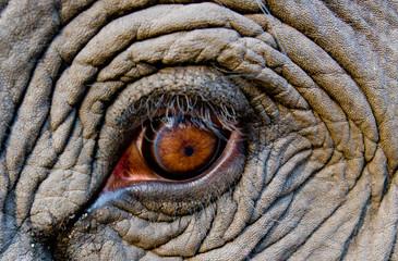 Elephant eye, Bandhavgarh National Park, India