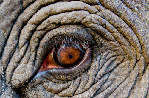 Elephant eye, Bandhavgarh National Park, India